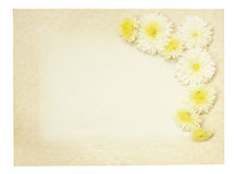 Old vintage paper frame with white aster flowers. Isolated on white Stock Photos