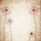 Old vintage paper texture background with dry flowers Stock Images