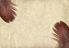 Old vintage paper texture background with feather Royalty Free Stock Image