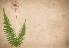 Old vintage paper texture with dry fern leaves and flower Stock Image
