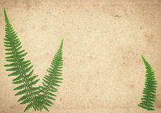 Old vintage paper texture with dry fern leaves. Old vintage paper texture with green dry fern leaves Stock Photos