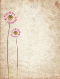 Old vintage paper texture with dry flowers Royalty Free Stock Photography