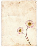 Old vintage paper texture with dry flowers Royalty Free Stock Photo