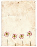 Old vintage paper texture with dry flowers Stock Photo