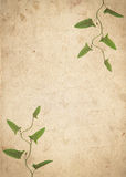 Old vintage paper texture with dry grass leaves Stock Image