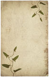 Old vintage paper texture with dry grass leaves Stock Photo