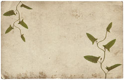 Old vintage paper texture with dry grass leaves Royalty Free Stock Images