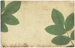 Old vintage paper texture with dry leaves isolated Stock Photos