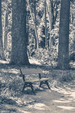 Old vintage photo. Park bench sunny day summer Royalty Free Stock Images