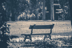 Old vintage photo. Park bench sunny day summer Royalty Free Stock Photos