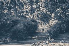 Old vintage photo. Park Bushes forest steps Royalty Free Stock Image