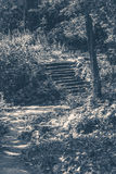 Old vintage photo. Park forest steps Royalty Free Stock Photography
