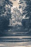 Old vintage photo. Park forest steps Stock Photos