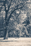 Old vintage photo. Park forest trees trunks glade Royalty Free Stock Image