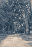 Old vintage photo. A path in a deciduous forest park in summer Royalty Free Stock Image