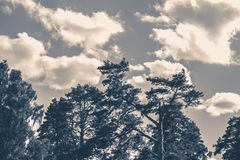 Old vintage photo. Sky clouds trees top summer Stock Photos