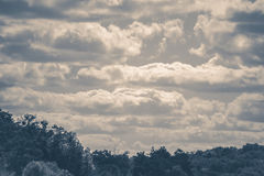Old vintage photo. Sky clouds trees top summer Royalty Free Stock Images