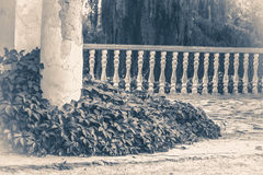 Old vintage photos. Oid Ruins column park Royalty Free Stock Images