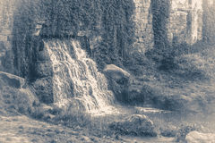 Old vintage photos. Park waterfall grass leaves copy space Royalty Free Stock Photo
