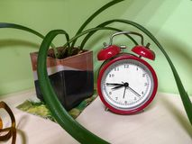 Old vintage red alarm clock standing on a wooden office desk. Bells ring and clock shakes on time. Office workstation in a stock photo