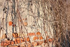 Old Vintage Red Brick Wall With Sprinkled Gray Cement Plaster Texture Background royalty free stock image