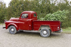 Old vintage red pickup truck carrying a Christmas tree in the be Stock Image