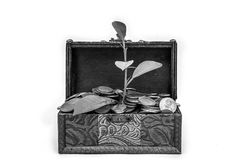 Old vintage retro chest with euro coins from which the plant grows isolated on white background Stock Photos