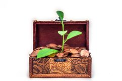 Old vintage retro chest with euro coins from which the plant grows isolated on white background Stock Photography