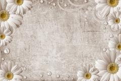 Old vintage shabby background with daisy. And pearls Stock Photos