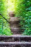 Old vintage stairway in a green forest with golden sunlight stock photo