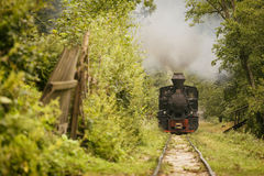 Old vintage train in green forest with big smoke Stock Image