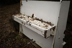 Old vintage white piano in a forest stock image