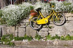Old vintage yellow bicycle hanging on stone wall among flowers. Old vintage yellow bicycle hanging on stone wall among  white flowers Stock Photography
