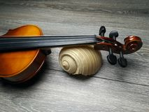 Violin and old sea shell. Old violin, music instrument and beautiful sea shell Stock Photo