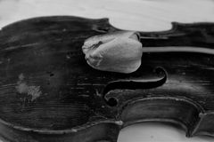 Old Violin And Tulip. Old violin and red tulip, black and white studio shot  concept of the arts Stock Photo
