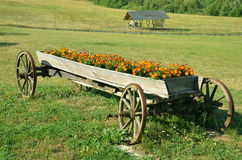 Old wagon as an decoration of farm. Old wagon now as an decoration of village farm Stock Photo