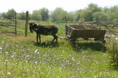 Old wagon with donkey. And old wagon with a donkey i found in the danube delta near the river Stock Photos