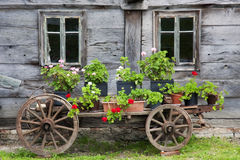Old wagon full of flowers stock images