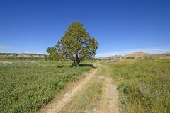 Old Wagon Road in the Prairie stock photography