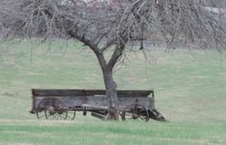 Old wagon. Rustic old wagon beneath tree on farm Stock Image