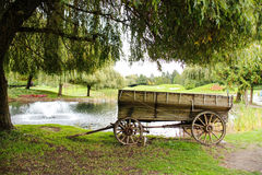 Old wagon under tree by the pond Stock Image