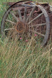 Old Wagon Wheel. An old wagon wheen left out in tall grass Stock Images