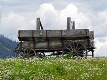 Old Wagon and White Daisies Royalty Free Stock Images
