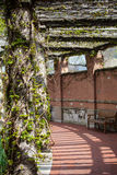 Old walkway. Vines on an old column and pergola Stock Photos