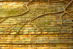 Old wall. Brick in the old wall Royalty Free Stock Photos