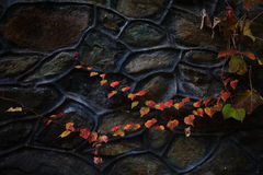 Old Wall with Autumn Leaves Stock Images