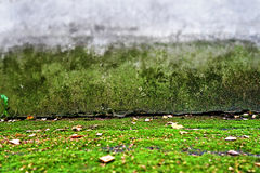Old Wall Background. Abstract Background with Old Wall and Moss Stock Photos
