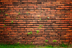 Old wall background. Old wall with little tree and grass stock photo