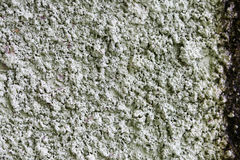 Old wall background texture. Old wall semen background color Stock Photography