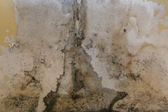 The old wall in the bathroom is covered with mold. Due to humidity in the room royalty free stock images